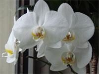 foto orchidee bild gedicht fotos orchideen bilder. Black Bedroom Furniture Sets. Home Design Ideas